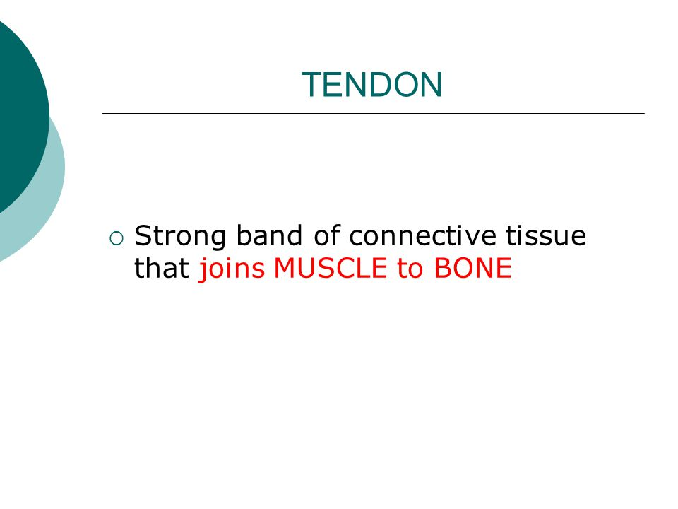 TENDON  Strong band of connective tissue that joins MUSCLE to BONE