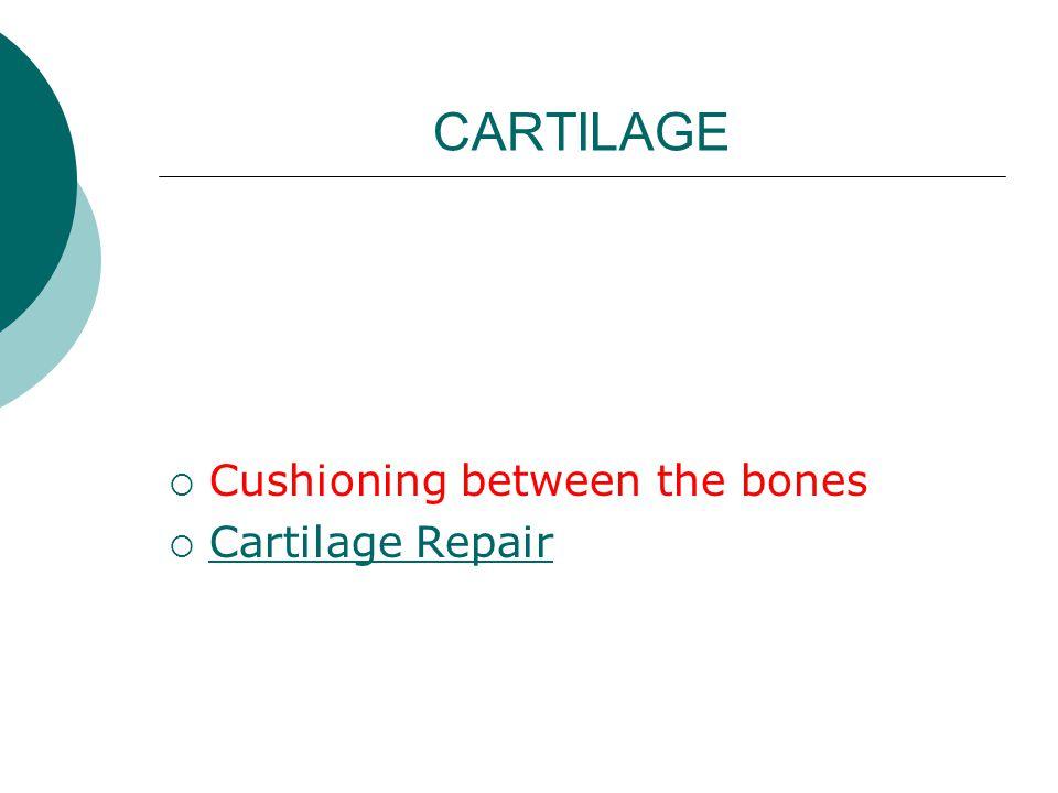 CARTILAGE  Cushioning between the bones  Cartilage Repair Cartilage Repair