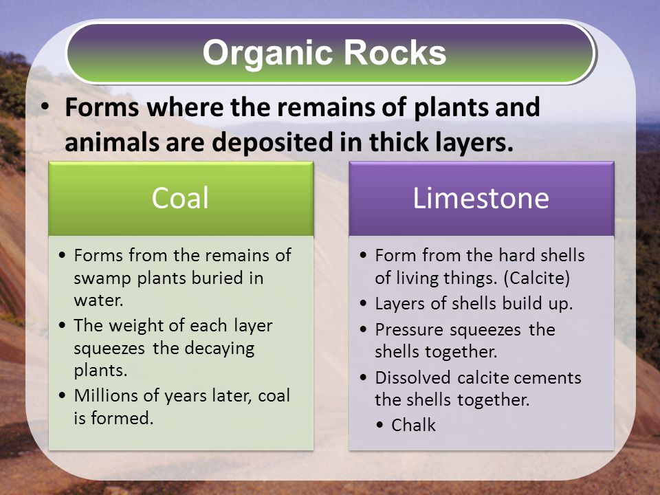 Forms where the remains of plants and animals are deposited in thick layers.