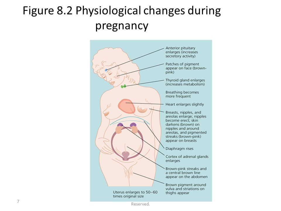 © 2010 McGraw-Hill Companies. All Rights Reserved. 7 Figure 8.2 Physiological changes during pregnancy