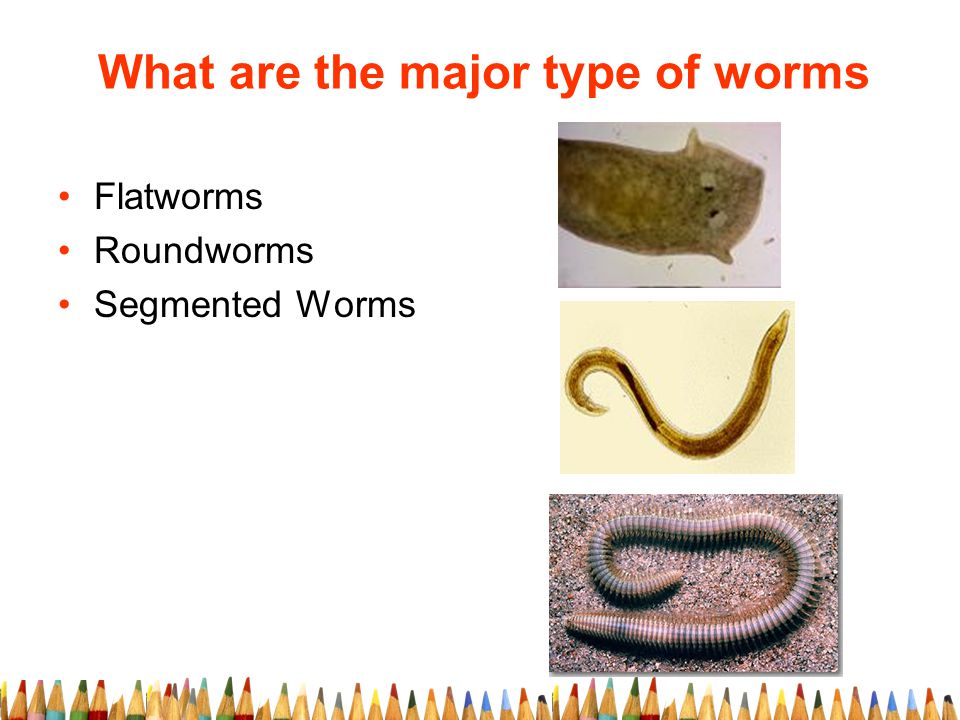 What are the major type of worms Flatworms Roundworms Segmented Worms