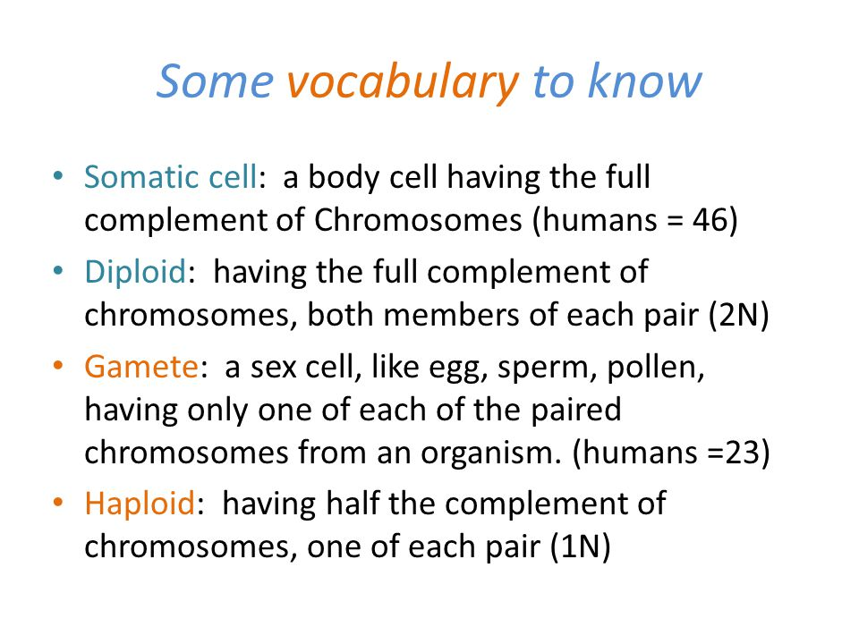 Some vocabulary to know Somatic cell: a body cell having the full complement of Chromosomes (humans = 46) Diploid: having the full complement of chrom