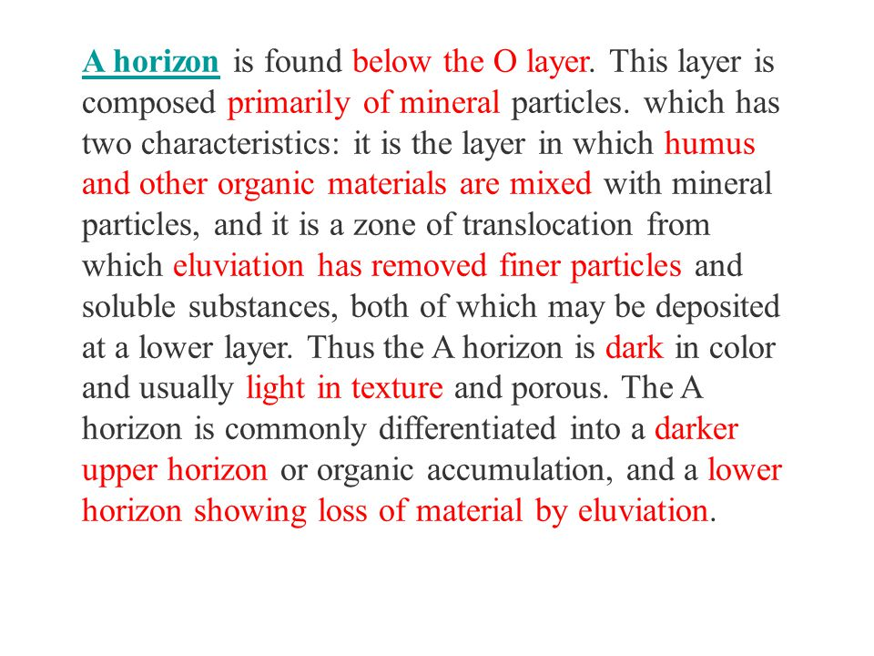 The B horizon is a mineral soil layer which is strongly influenced by illuviation.
