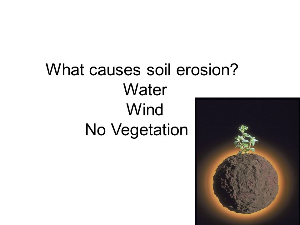 What causes soil erosion? Water Wind No Vegetation
