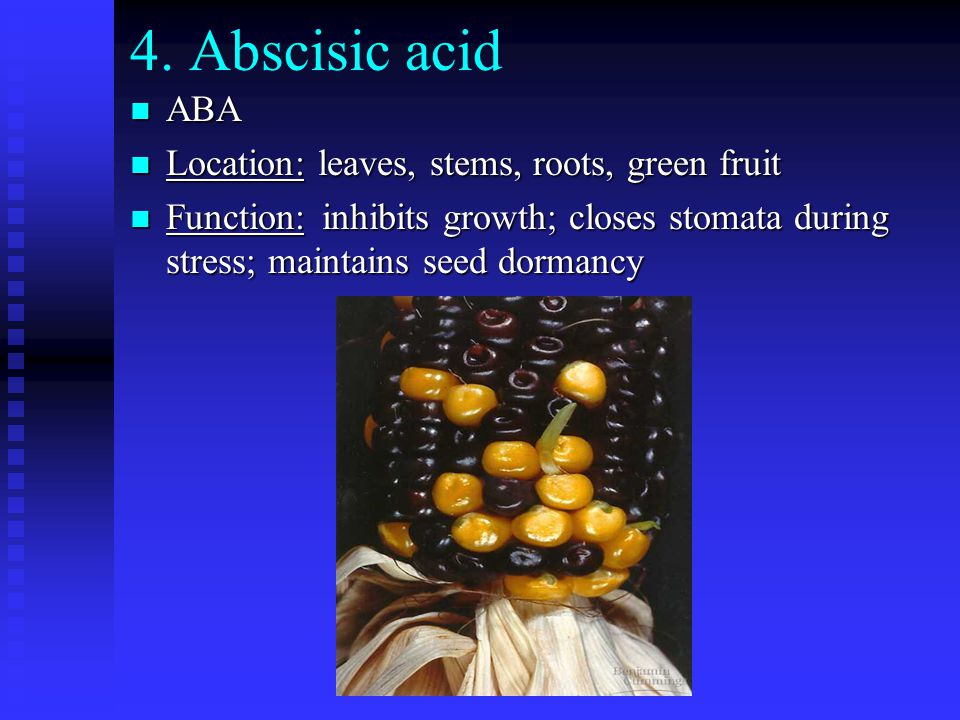 4. Abscisic acid n ABA n Location: leaves, stems, roots, green fruit n Function:inhibits growth; closes stomata during stress; maintains seed dormancy