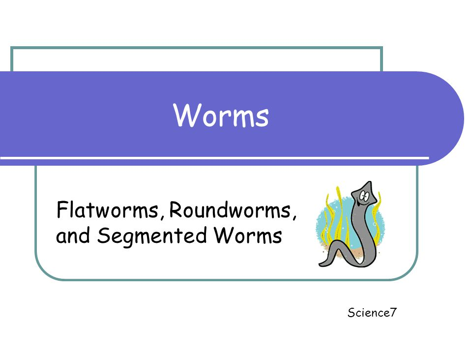 Worms Flatworms, Roundworms, and Segmented Worms Science7