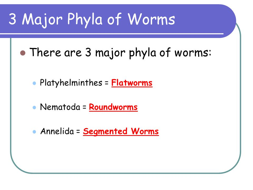 3 Major Phyla of Worms There are 3 major phyla of worms: Platyhelminthes = Flatworms Nematoda = Roundworms Annelida = Segmented Worms