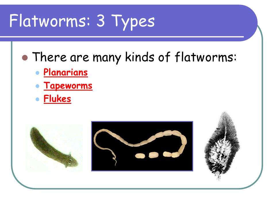 Flatworms: 3 Types There are many kinds of flatworms: Planarians Tapeworms Flukes