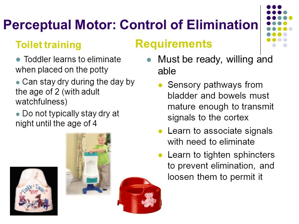 Perceptual Motor: Control of Elimination Requirements Must be ready, willing and able Sensory pathways from bladder and bowels must mature enough to transmit signals to the cortex Learn to associate signals with need to eliminate Learn to tighten sphincters to prevent elimination, and loosen them to permit it Toilet training Toddler learns to eliminate when placed on the potty Can stay dry during the day by the age of 2 (with adult watchfulness) Do not typically stay dry at night until the age of 4