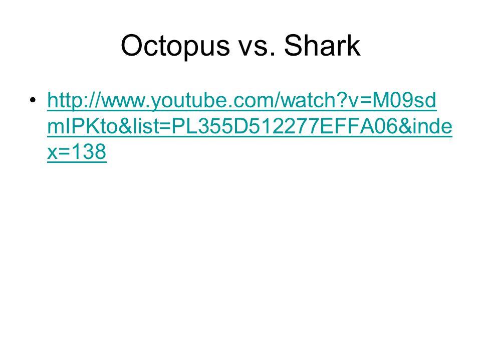Octopus vs.