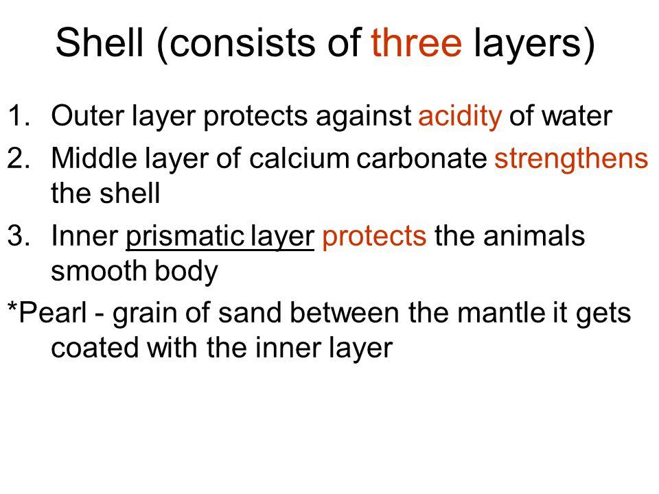 Class Oligochaeta few bristles Live in soil or in fresh water No parapodia Few setae on each segment Ex: earthworm