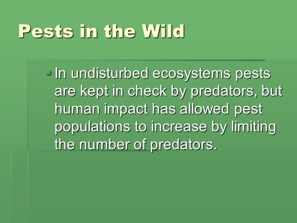 Pests in the Wild  In undisturbed ecosystems pests are kept in check by predators, but human impact has allowed pest populations to increase by limiting the number of predators.