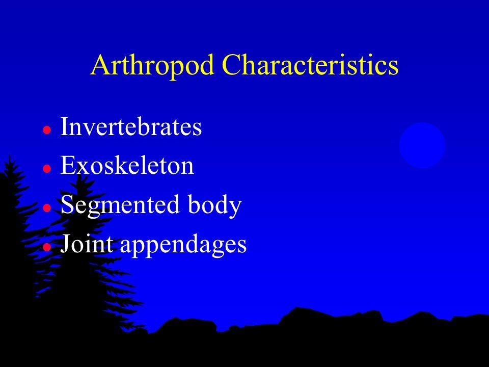 Arthropod Characteristics l Invertebrates l Exoskeleton l Segmented body l Joint appendages