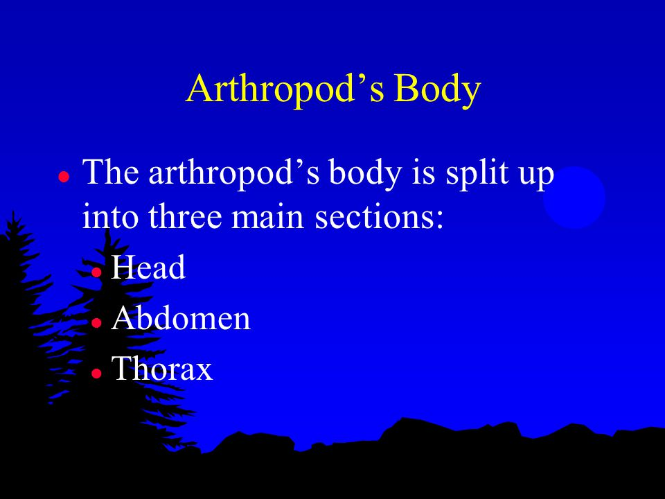 Arthropod's Body l The arthropod's body is split up into three main sections: l Head l Abdomen l Thorax