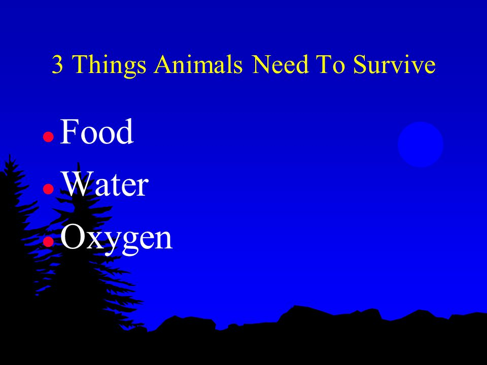 3 Things Animals Need To Survive l Food l Water l Oxygen