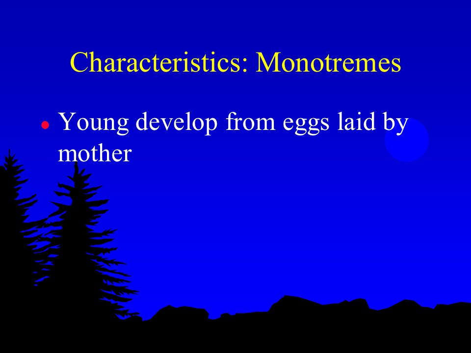 Characteristics: Monotremes l Young develop from eggs laid by mother