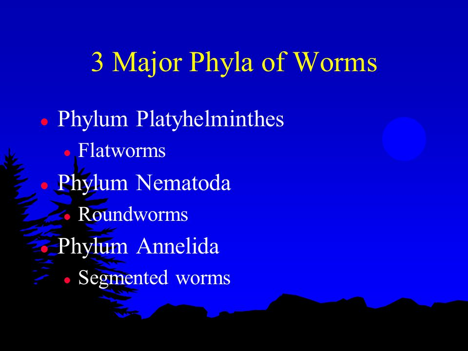 3 Major Phyla of Worms l Phylum Platyhelminthes l Flatworms l Phylum Nematoda l Roundworms l Phylum Annelida l Segmented worms