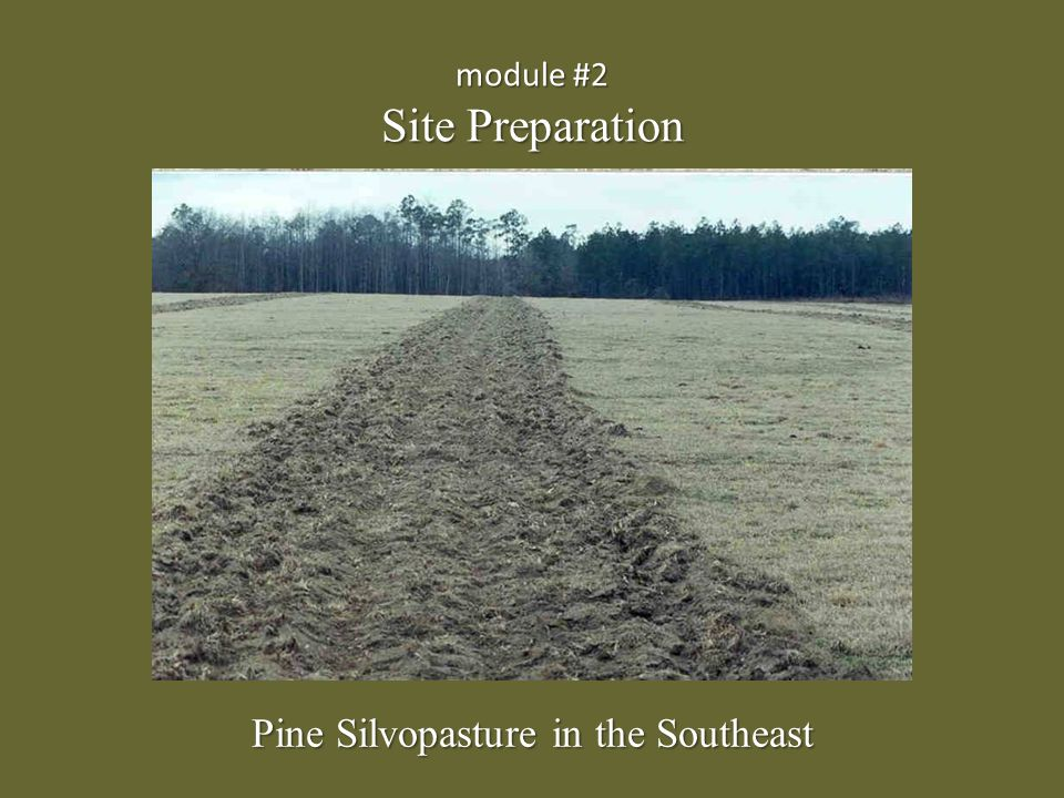 An existing pasture can be easily converted to a silvopasture with proper site preparation.