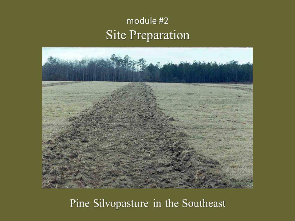module #2 Site Preparation Pine Silvopasture in the Southeast