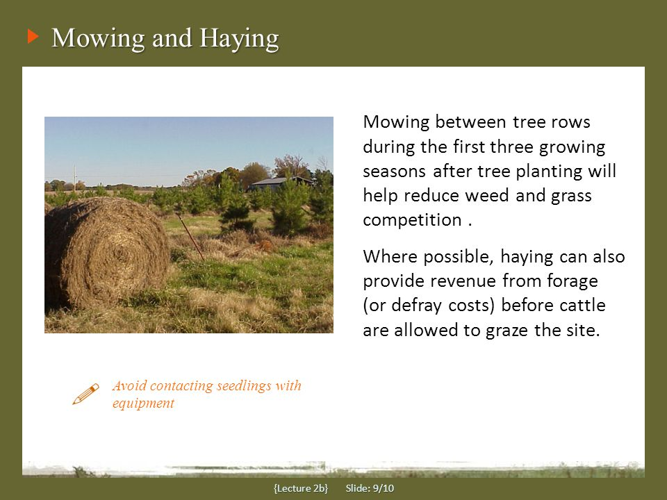 Summary {Lecture 2b} Slide: 10/10 Site Preparation is perhaps one of the most important steps in establishing a high-quality silvopasture and may include:  Disking  Subsoiling or ripping  Scalping  Herbicide treatments Each of these methods are used to loosen the soil for good root growth and/or to reduce the level of competition from weeds until trees can become established