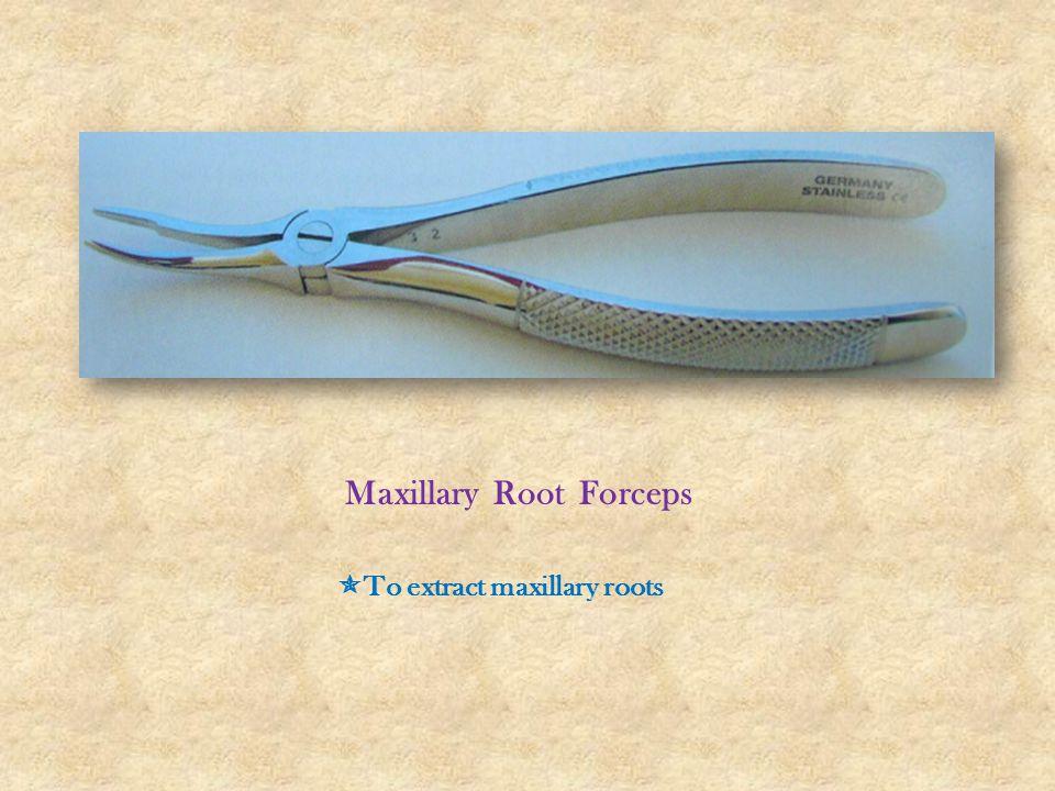 Maxillary Root Forceps  To extract maxillary roots
