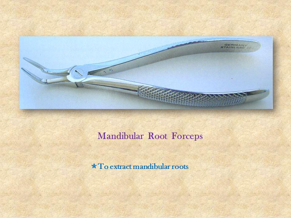 Mandibular Root Forceps  To extract mandibular roots