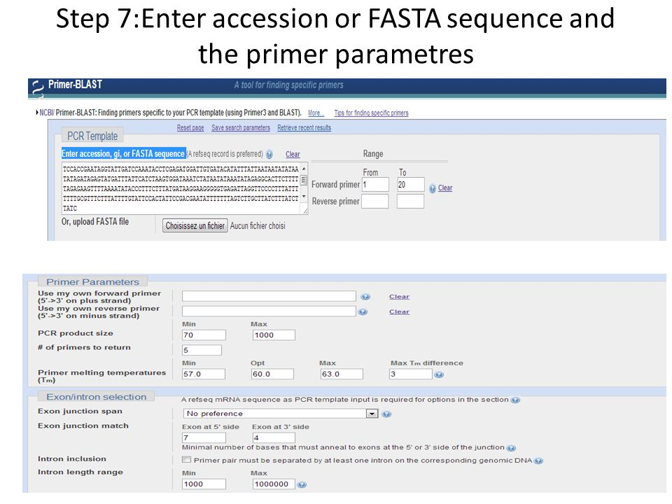Step 7:Enter accession or FASTA sequence and the primer parametres