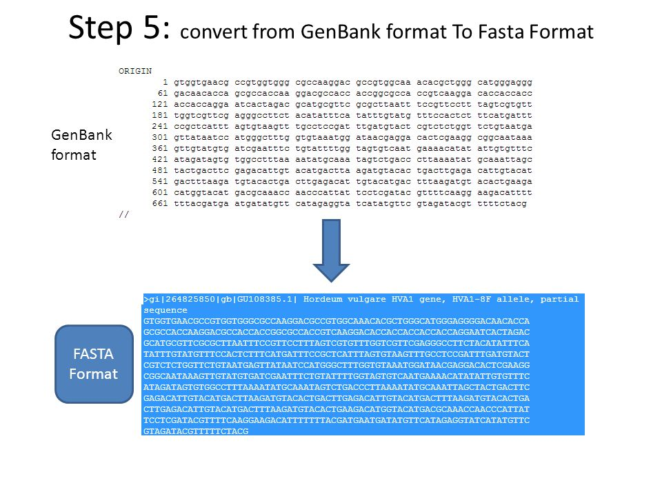 Step 5: convert from GenBank format To Fasta Format GenBank format FASTA Format