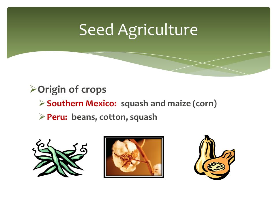  Origin of crops  Southern Mexico: squash and maize (corn)  Peru: beans, cotton, squash Seed Agriculture