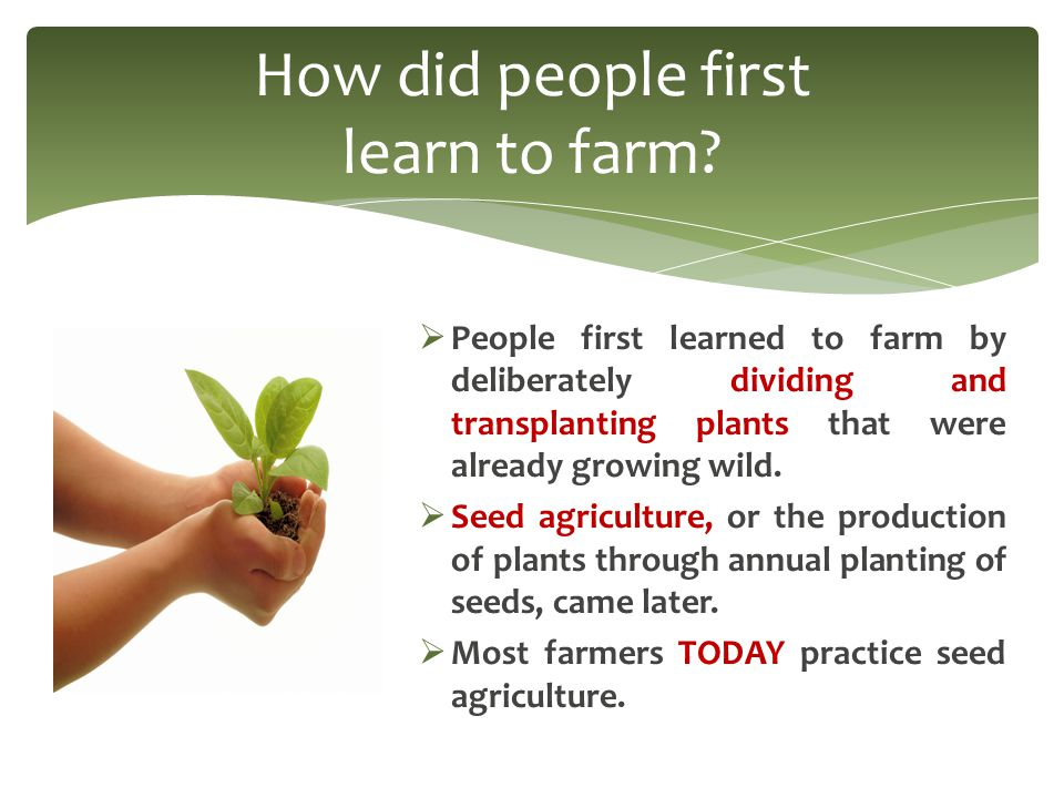  People first learned to farm by deliberately dividing and transplanting plants that were already growing wild.
