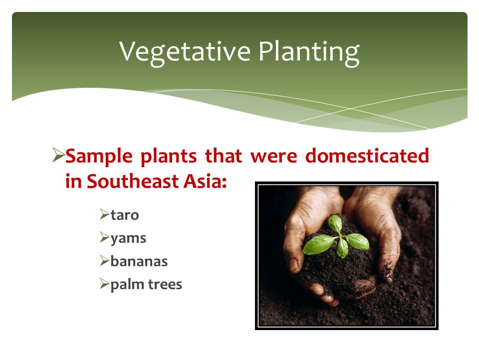  The first vegetative planting diffused from the Southeast Asian hearth:  northward and eastward to China and Japan.