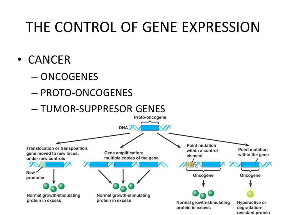 THE CONTROL OF GENE EXPRESSION CANCER – ONCOGENES – PROTO-ONCOGENES – TUMOR-SUPPRESOR GENES