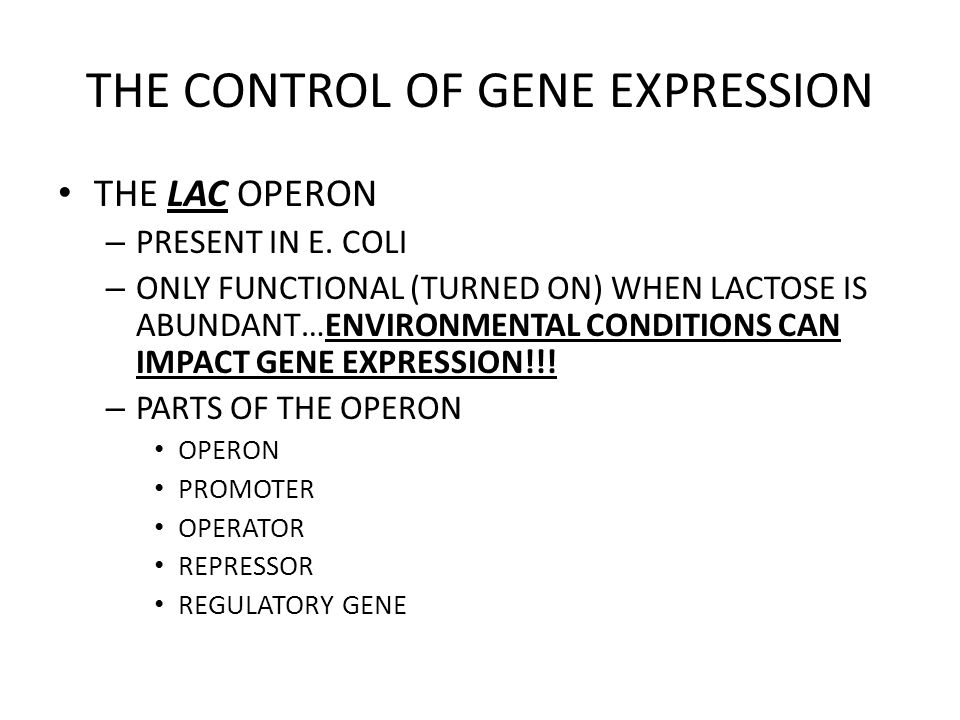 THE CONTROL OF GENE EXPRESSION THE LAC OPERON – HOW DOES IT WORK?!?!