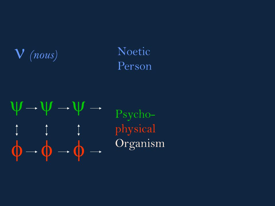        (nous) Psycho- physical Organism Noetic Person