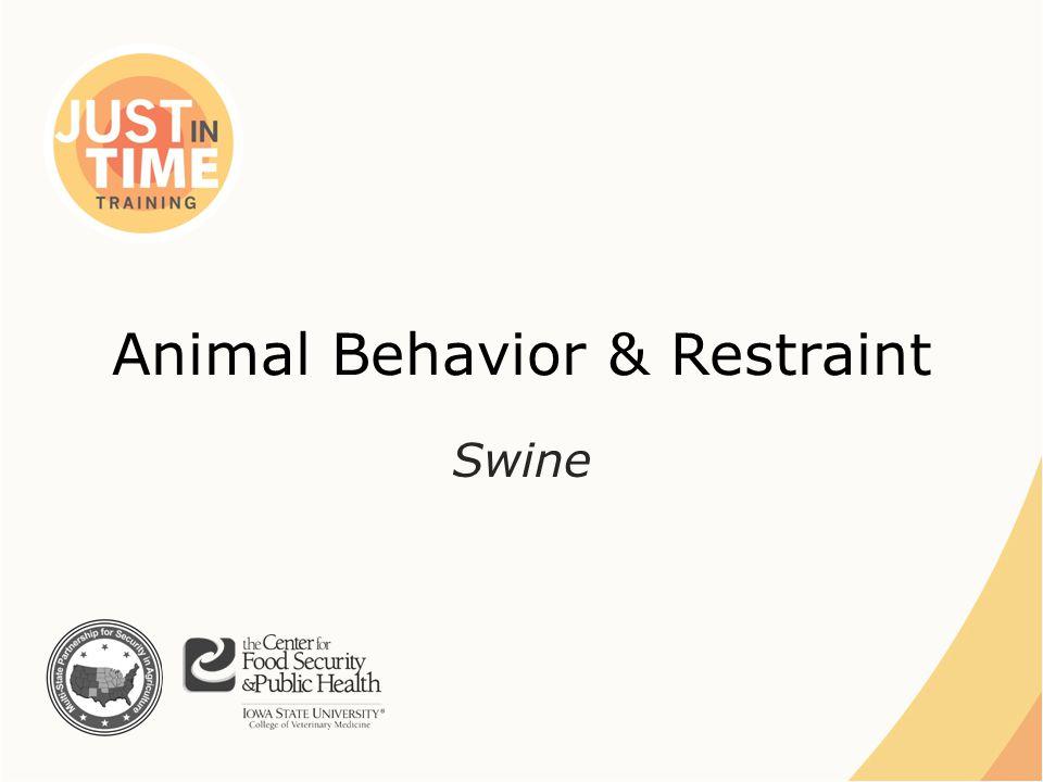 Animal Behavior & Restraint Swine