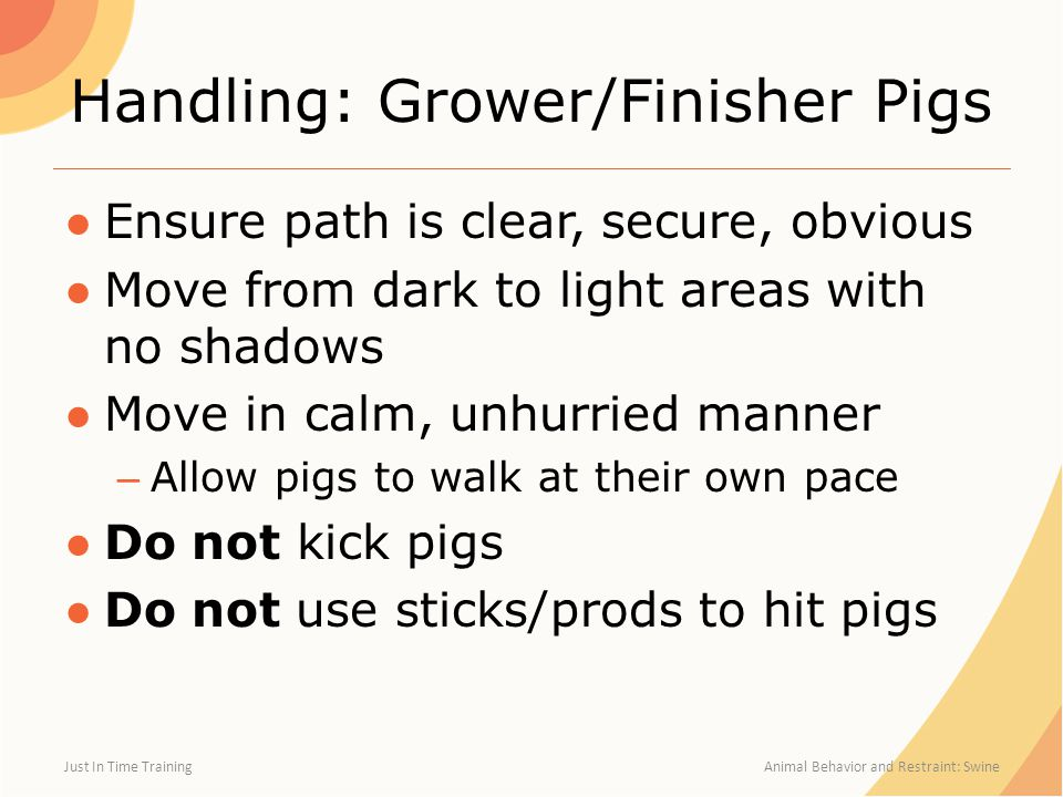 Handling: Grower/Finisher Pigs ●Ensure path is clear, secure, obvious ●Move from dark to light areas with no shadows ●Move in calm, unhurried manner – Allow pigs to walk at their own pace ●Do not kick pigs ●Do not use sticks/prods to hit pigs Just In Time Training Animal Behavior and Restraint: Swine