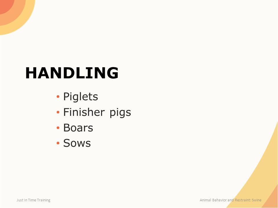 HANDLING Piglets Finisher pigs Boars Sows Just In Time Training Animal Behavior and Restraint: Swine