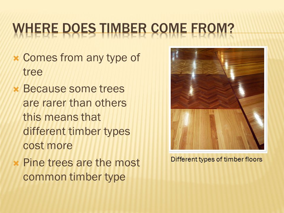  Comes from any type of tree  Because some trees are rarer than others this means that different timber types cost more  Pine trees are the most common timber type Different types of timber floors