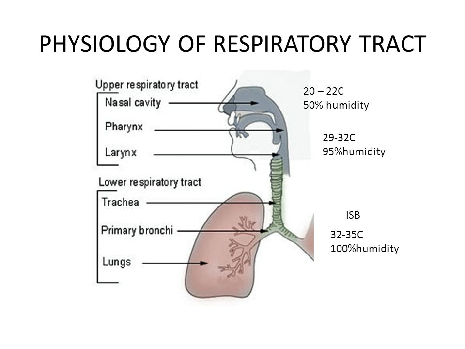 PHYSIOLOGY OF RESPIRATORY TRACT 20 – 22C 50% humidity 29-32C 95%humidity 32-35C 100%humidity ISB