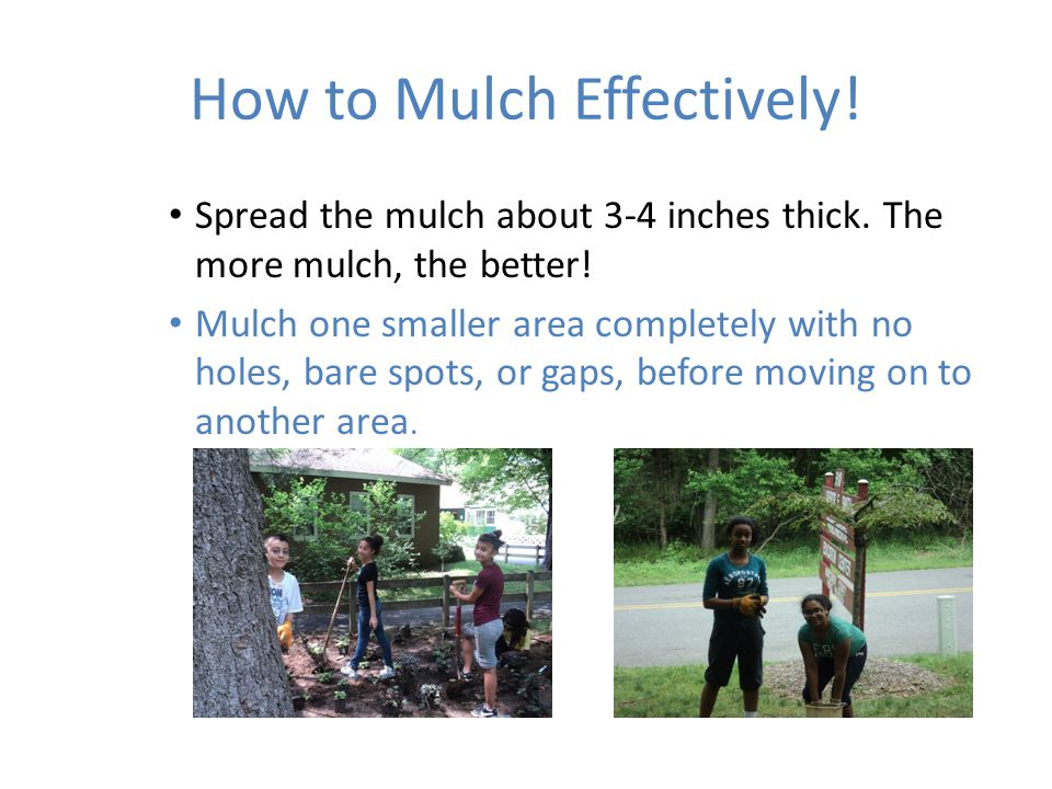 How to Mulch Effectively. Spread the mulch about 3-4 inches thick.