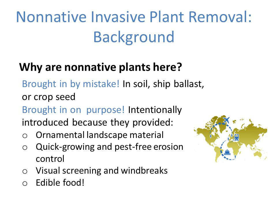 Nonnative Invasive Plant Removal: Background Why are nonnative plants here.