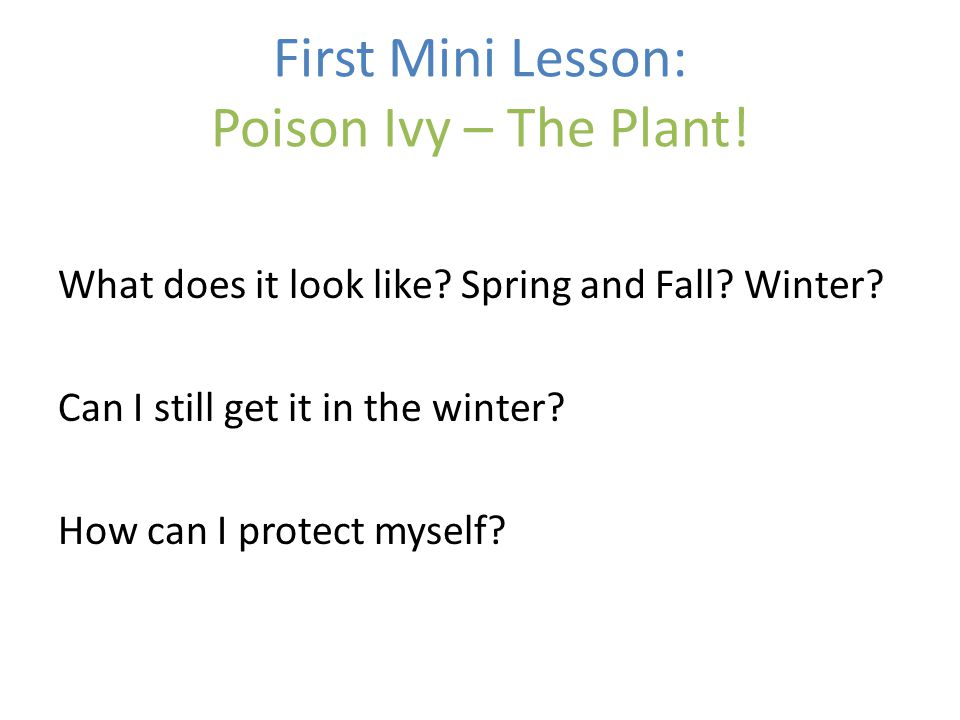 First Mini Lesson: Poison Ivy – The Plant. What does it look like.