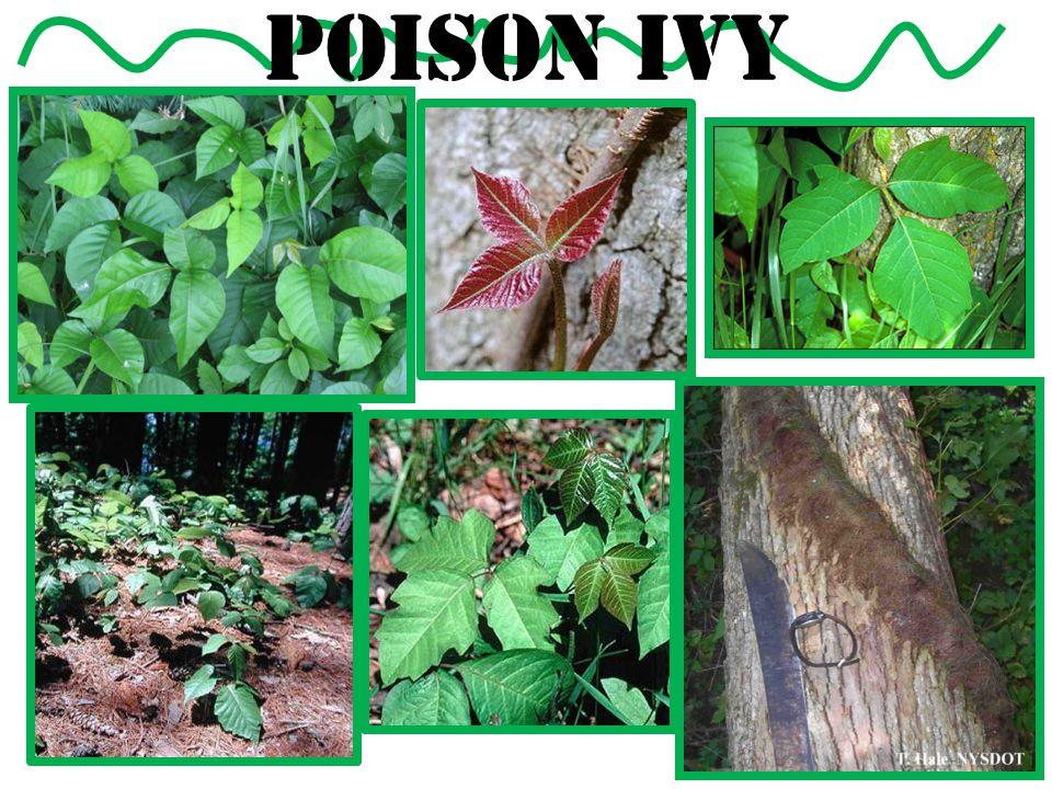Nonnative Invasive Plant Removal: Background Why are nonnative plants here.