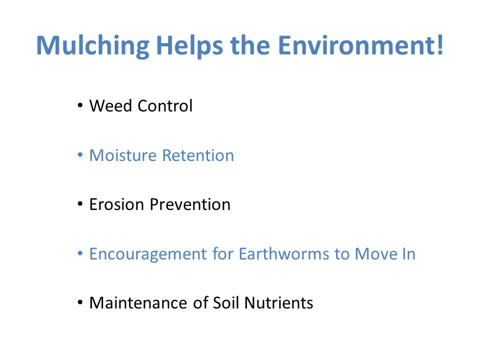 SSL Reflection Discourse: Now that we have completed our work for today, talk with an elbow partner about: What you learned about removing nonnative invasive plants that you did not know before How this SSL work helped the environment(i.e.