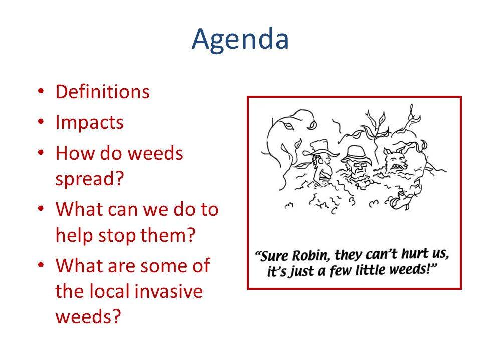 Weedy Definitions Weeds – Plants growing where they are not wanted Invasive Weeds – Non-native plants that spread into natural ecosystems and harm those ecosystems Noxious Weeds – Washington State's legal term for invasive, non- native plants that threaten agricultural crops, human health, local ecosystems or fish and wildlife habitat