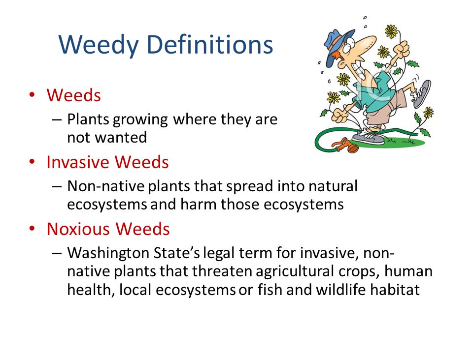 Weedy Definitions Weeds – Plants growing where they are not wanted Invasive Weeds – Non-native plants that spread into natural ecosystems and harm tho