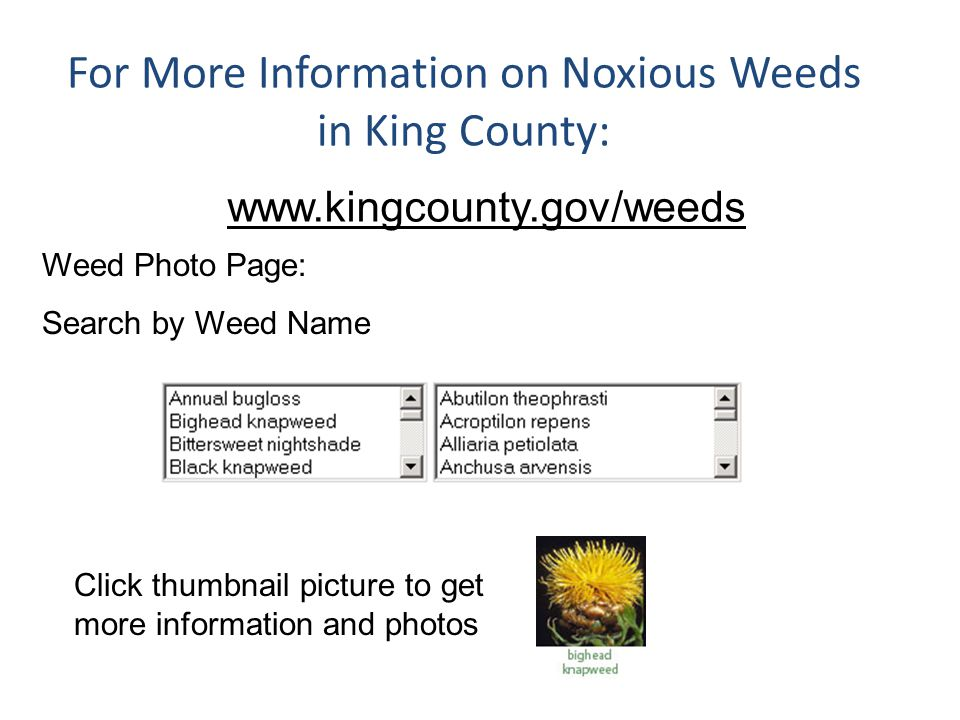 For More Information on Noxious Weeds in King County: www.kingcounty.gov/weeds Weed Photo Page: Search by Weed Name Click thumbnail picture to get mor