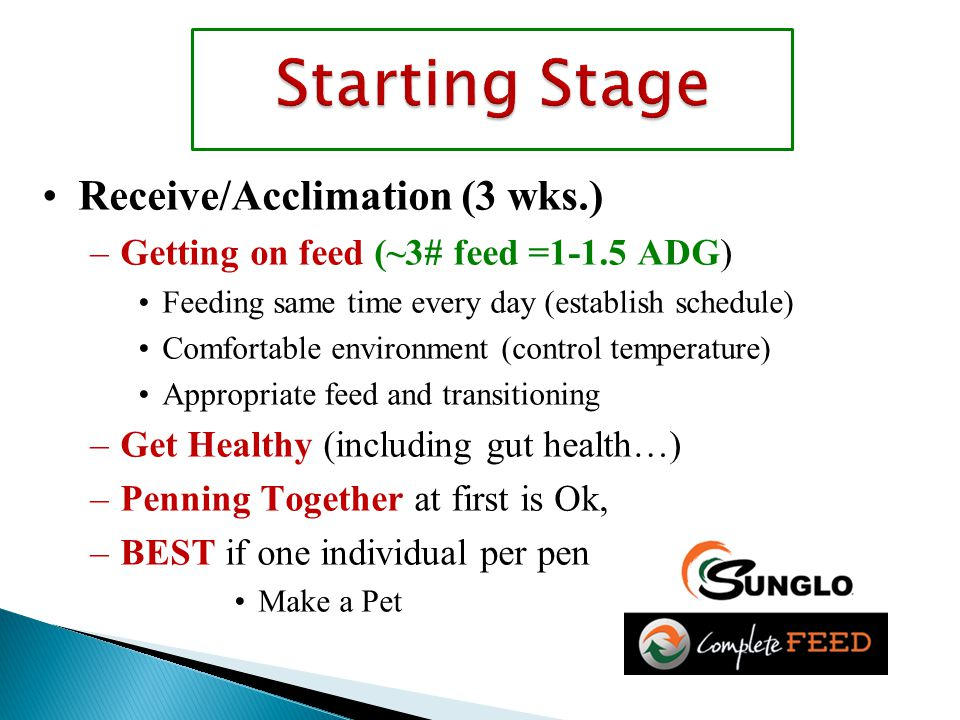 Receive/Acclimation (3 wks.) –Getting on feed (~3# feed =1-1.5 ADG) Feeding same time every day (establish schedule) Comfortable environment (control temperature) Appropriate feed and transitioning –Get Healthy (including gut health…) –Penning Together at first is Ok, –BEST if one individual per pen Make a Pet
