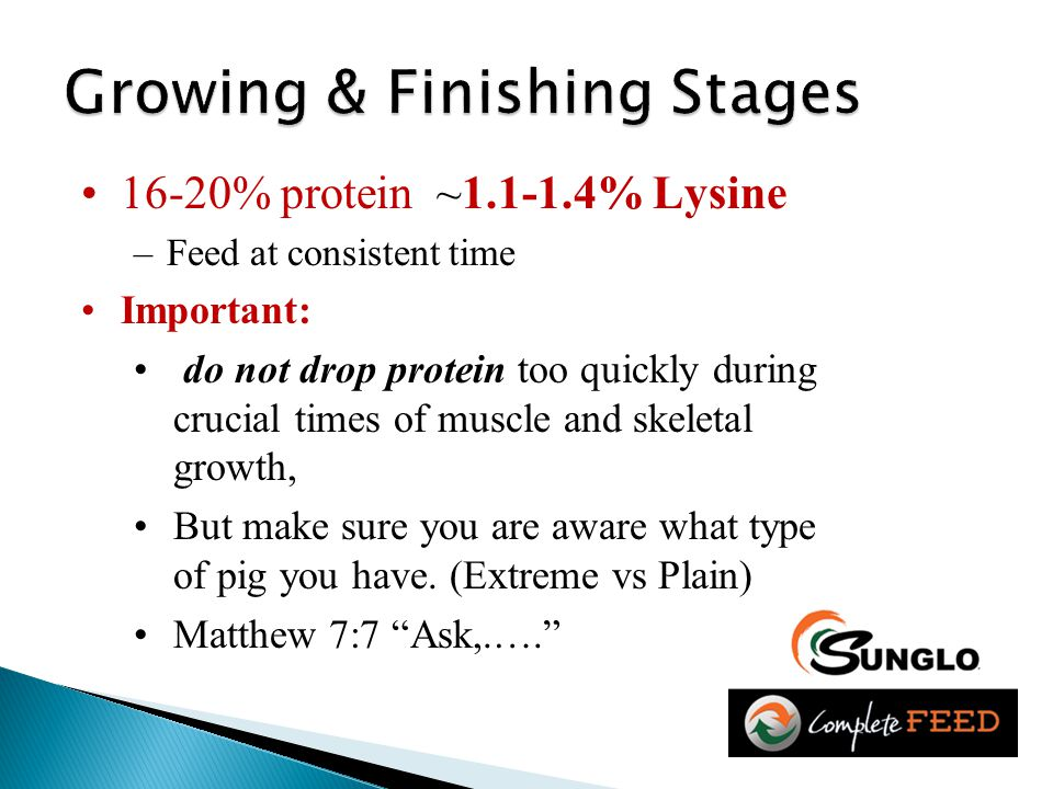 16-20% protein ~1.1-1.4% Lysine –Feed at consistent time Important: do not drop protein too quickly during crucial times of muscle and skeletal growth, But make sure you are aware what type of pig you have.