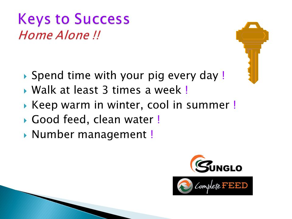 Spend time with your pig every day .  Walk at least 3 times a week .